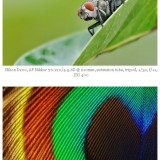 odd ways of macro photography